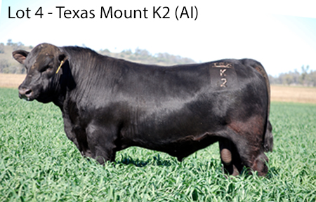 LOT 4 - TEXAS MOUNT K2 AI A